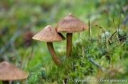 Hat-Mushrooms