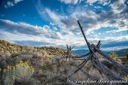 Old Merritt Fence