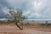Mangrove Beach 1