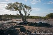 Mangrove Beach 2